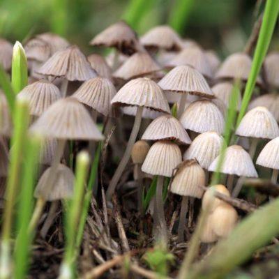Hallucinogenic Mushrooms Treat Depression?