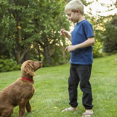 Basic Dog Training Bergen County Nj